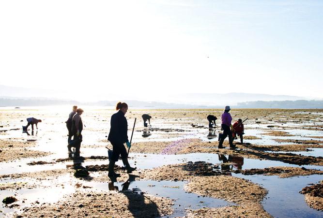 Acht Personen, ausgerüstet mit Kübeln, sammeln zu Fuß nach der Flut verschiedene Muscheln.