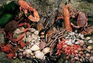 Sammlung von verschiedenen, frisch gefangen Meeresfrüchten. Muscheln, Garnelen, Krabben, etc.