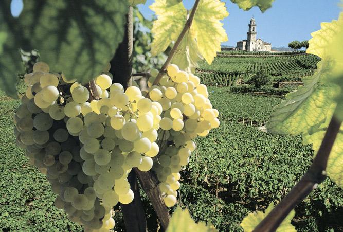 Beade ist einer der ersten Weinberge Galiciens, die von den Römern angelegt wurden