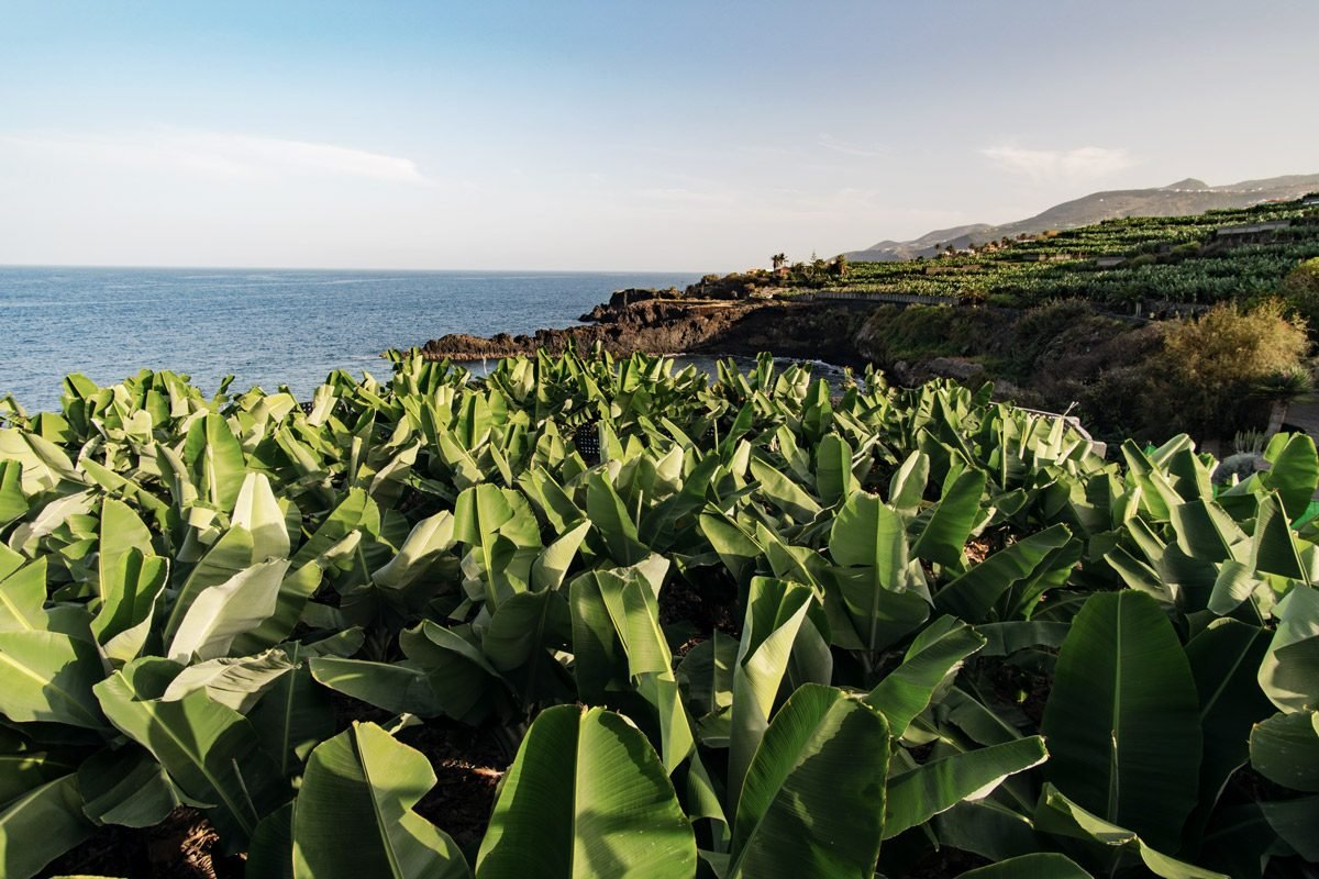 grüne Blätter vor Meer
