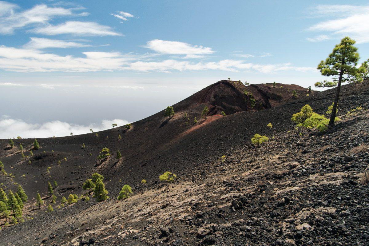 schwarzer Lava mit ein paar grünen Bäumen