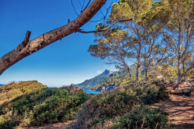 Sträucher und Bäume an einem Pfad, Blick auf die Küste und blauer Himmel