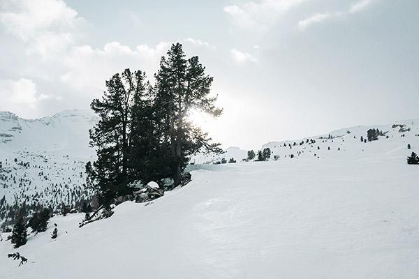 Sonne hinter Tannen, Lavarellahütte Dolomiten