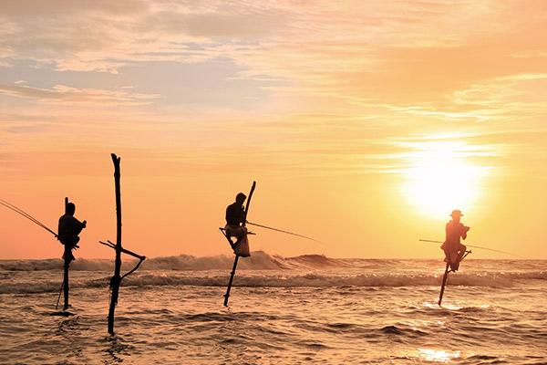 Stelzenfischer, Sri Lanka
