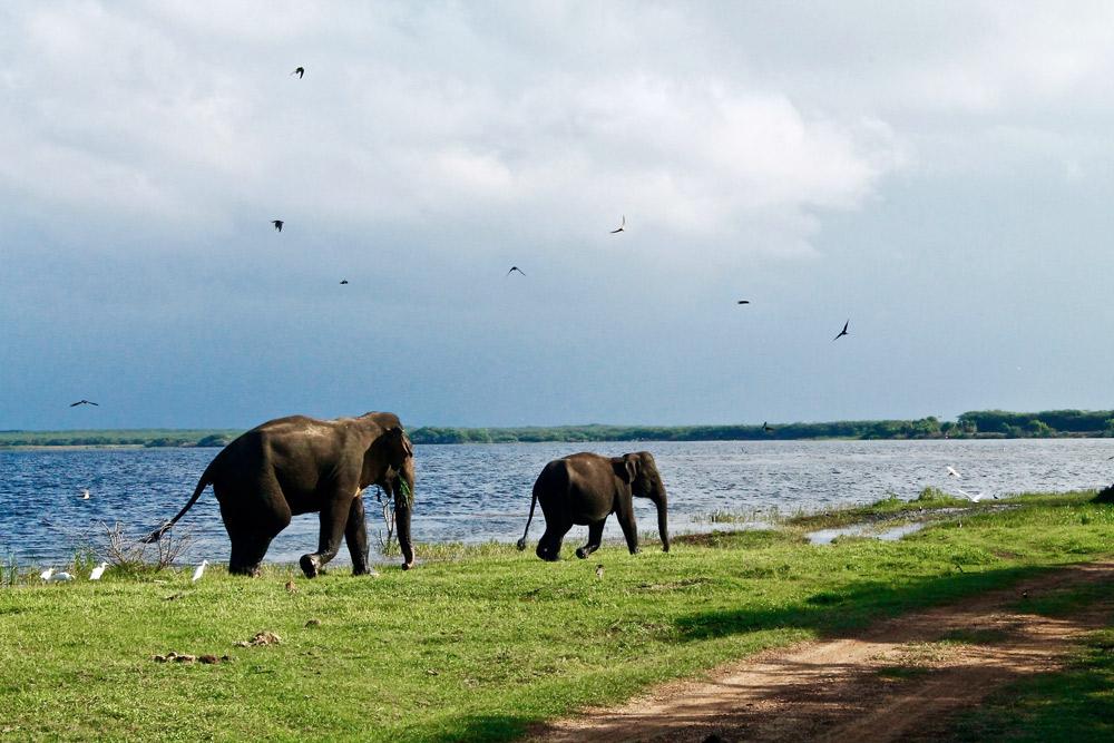 zwei elefanten spazieren vor blauem see auf grüner wiese