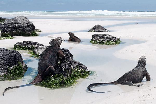 Galapagosinseln, Suedamerika