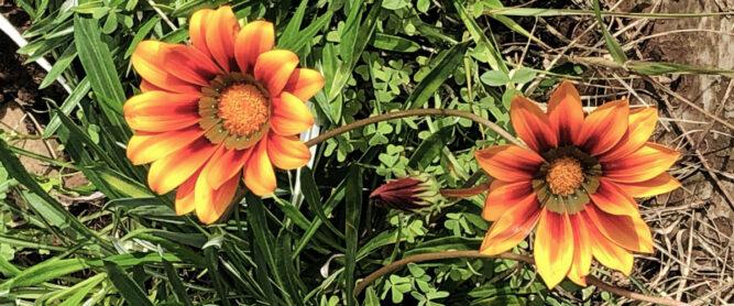 Orange Blumen, Madeira