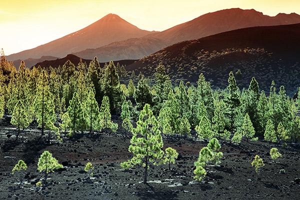 vulkanische Landschaft im Teide Nationalpark, Teneriffa