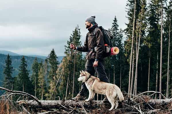 Wanderer mit sibirischem Husky