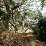 Herbstlicher Wanderweg im Laub