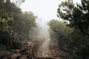 Wanderpfad im Nebel